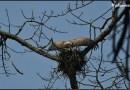 Kaziranga National Park can give you a super rich birding experience