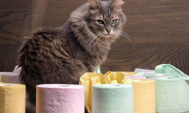 bigstock-Cat-and-a-lot-of-toilet-paper-117721148