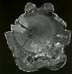 The tomographic cross-sections (scanned) produced using x-rays enables a very precise visualisation of all internal work on wooden or ceramic sculptures.