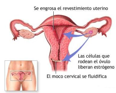 primer semana de embarazo