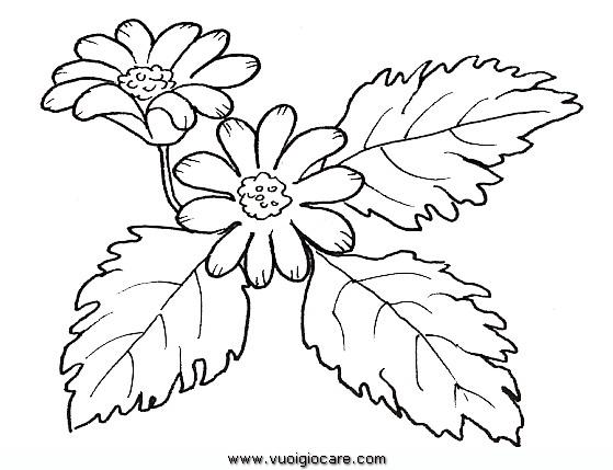 Anemone Disegni Da Colorare
