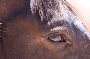 Auge in Auge mit den Wüstenpferden, Namibia