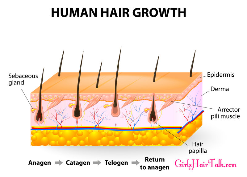 Female Hair Loss Causes, Treatments To Get Fast Hair Regrowth!
