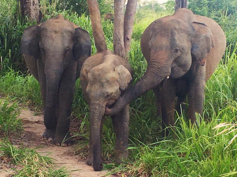 Meeting the locals on elephant safari