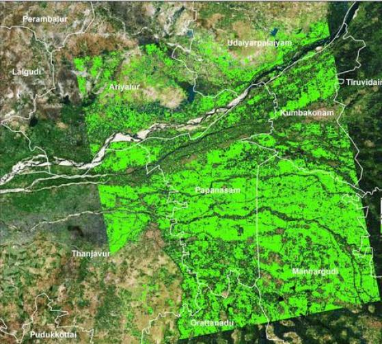 A map of paddy cultivated area in Thanjavur prepared using images from the Sentinel 1A satellite.