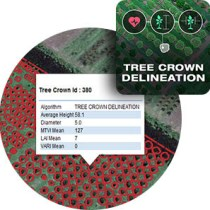 tree-crown-delineation