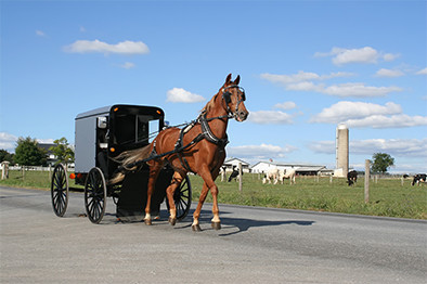 An Amish Horse Drawn Carriage