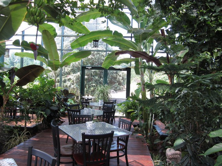 Tropical conservatory glass house winery