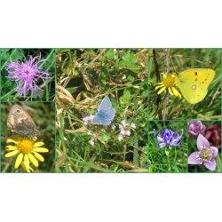 Small Crop Of Little White Butterflies