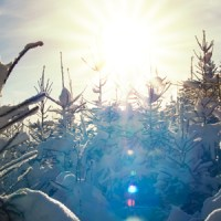 6 simple tips to create artistic sun flare in your photos