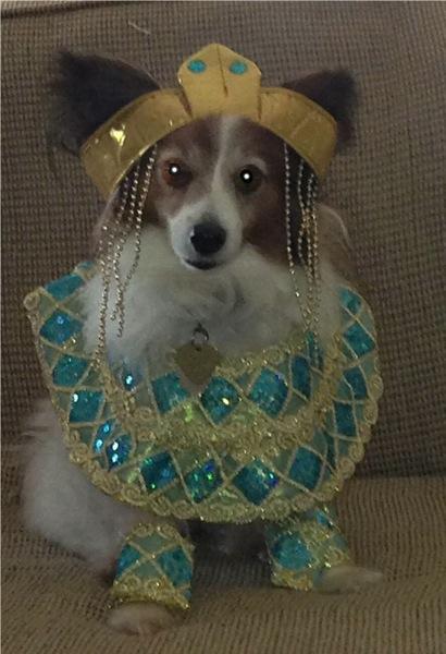 cleopatra dog halloween costume