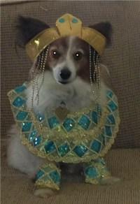 cleopatra dog halloween costume | Global Animal