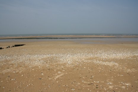 View on the beach - from the observation post position