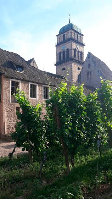 The church near the vineyard