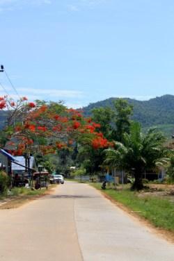 arbre en fleurs - koh yao yai - thailande