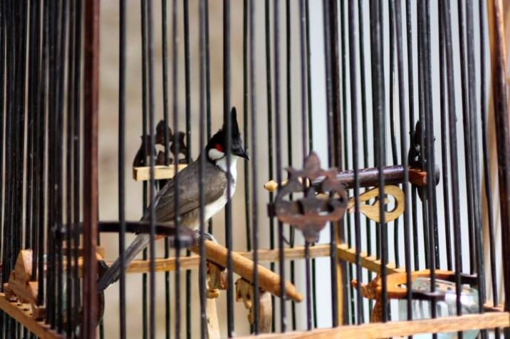 oiseau cage - phuket