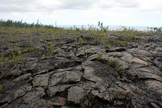 ancienne coulée - ile de la Réunion