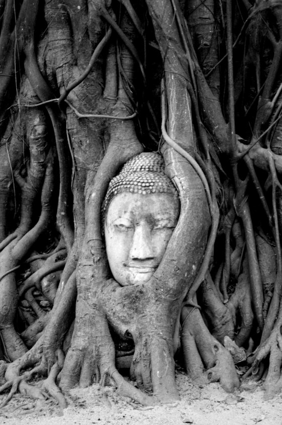 Bouddha arbre - Ayutthaya - Thailande