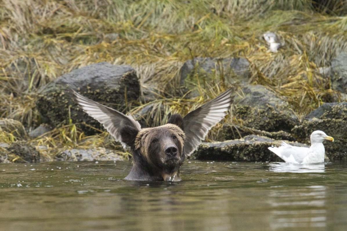 © Adam Parsons, comedy wildlife photo awards 2016