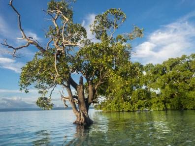Inselparadies Raja Ampat Mangroven