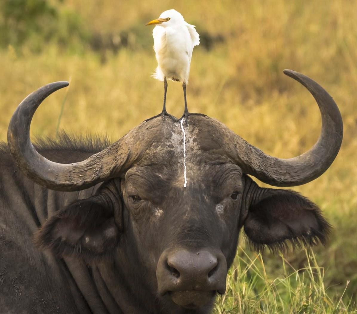 © Tom Stables, comedy wildlife photo awards 2016