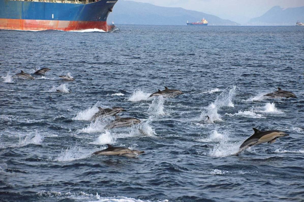Delfine und Wale Gibraltar Katharina Heyer 06