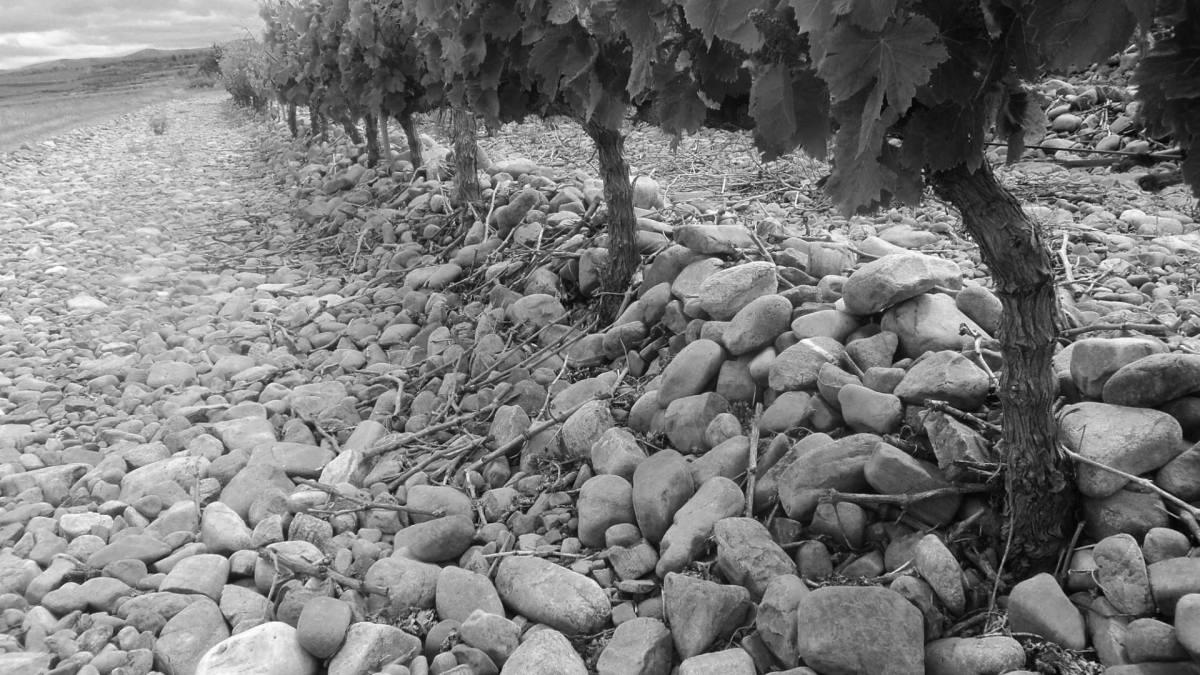 Uno... - Saxa Loquuntur La Rioja