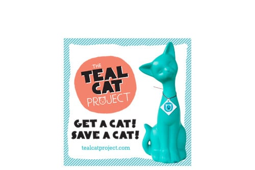 teal cat project