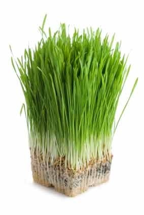 Does Wheat Grass Contain Gluten?