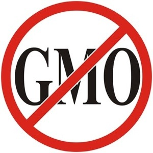 A New Reason Why Wheat And GMOs Can Destroy Your Health   by Sayer Ji