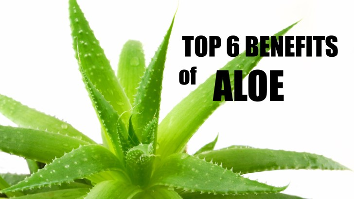 TOP 6 HEALTH BENEFITS OF ALOE