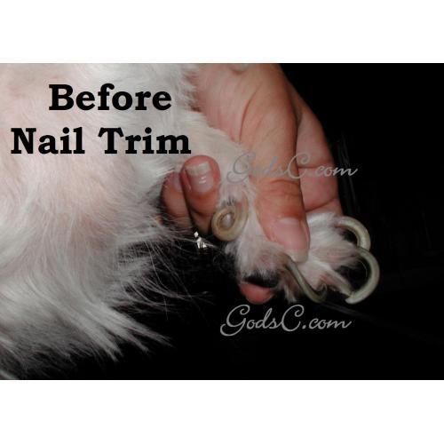 Medium Crop Of Dog Dew Claw