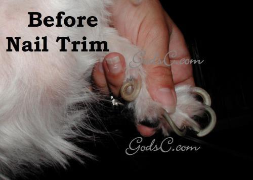 Medium Of Dog Dew Claw