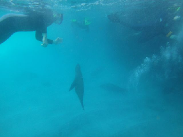 snorkeling in the Galapagos Islands
