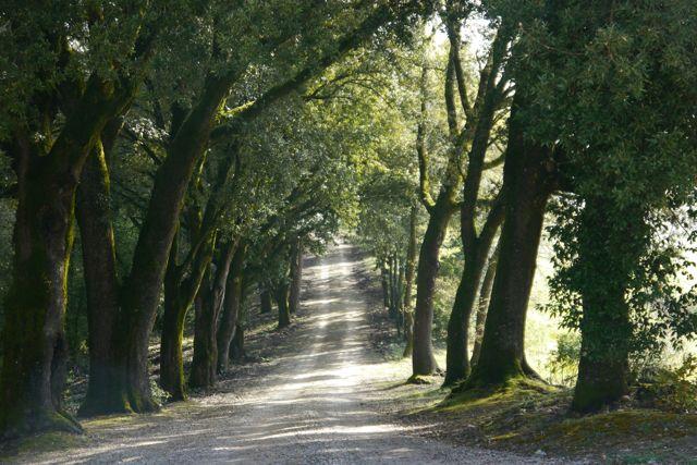 walking in Tuscan Countryside