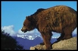Bear Spray Rental, Glacier National Park, Bears, Apgar Village, Bear, Spray, Rent,