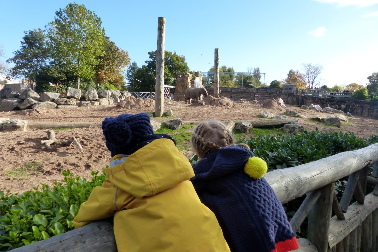 Girls watching elephants at Chester Zoo