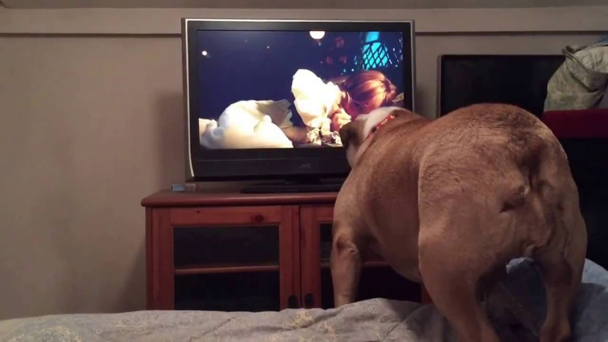 Watch this English Bulldog's Reaction to a Horror Movie