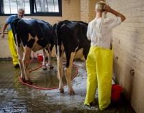 003Colors, Kids & Cows-_DSC3835