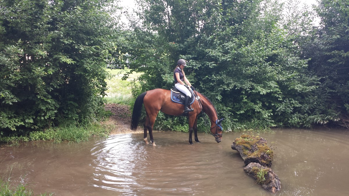 Comtess Ratina S im Wasser 1