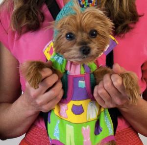 Gone Doggie Gone - Cutest Yorkie Ever