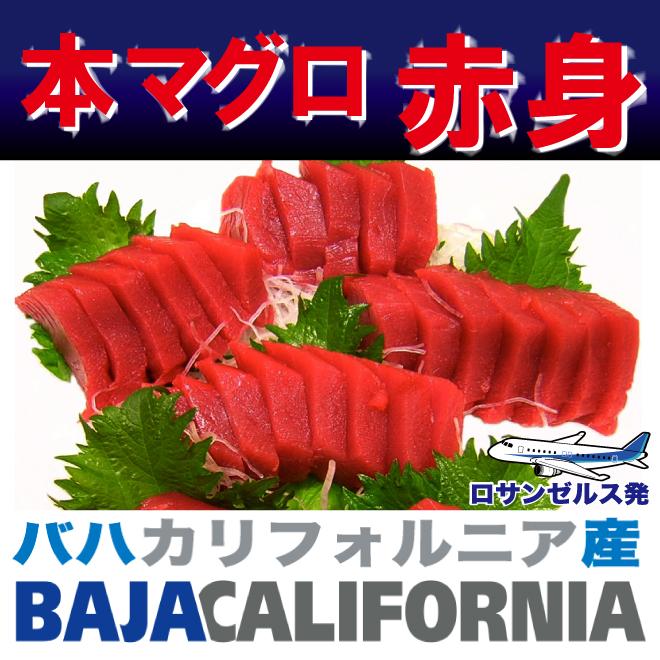 北太平洋 バハ カリフォルニア産 本マグロ 赤身