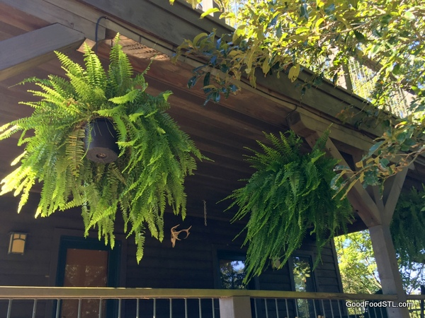 Ferns sway in the breeze