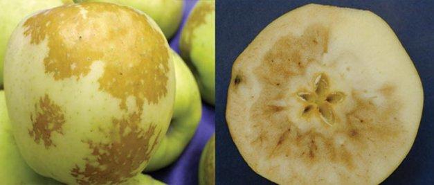 Dealing With Carbon Dioxide Sensitivity Good Fruit Grower
