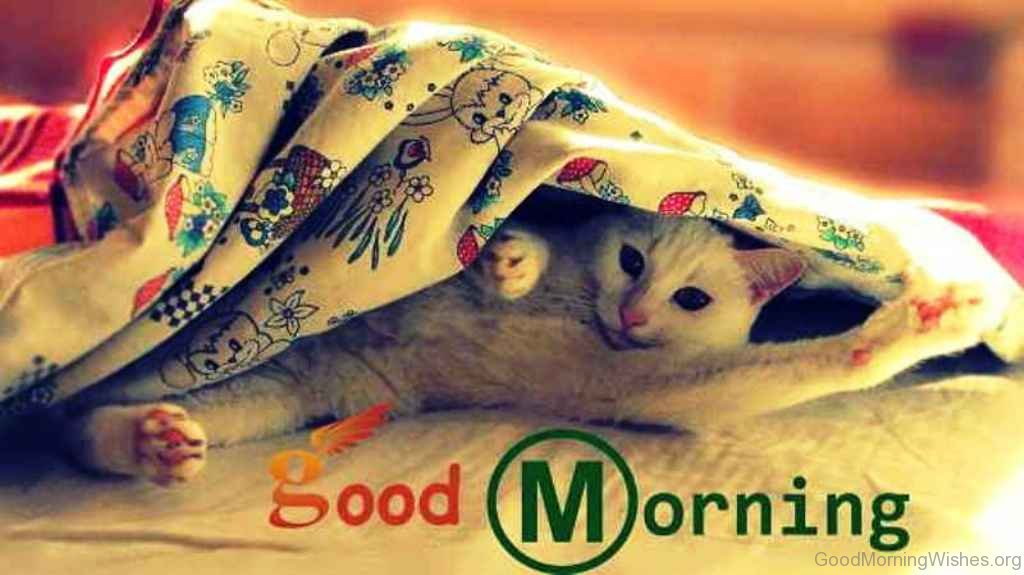 Punjabi Romantic Quotes Wallpaper 50 Funny Good Morning Wishes