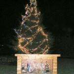 biddulph moor christmas tree low res