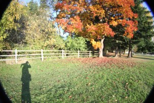 Funny Shadow, Bright Leaves