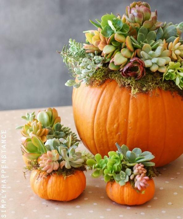 Fall Flowers And Pumpkins Wallpaper Diy Pumpkin Succulent Garden Tutorial