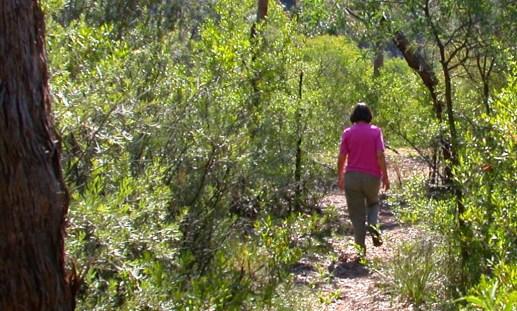 Bungonia trail