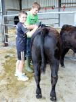 Kevin and cousin Jack busy grooming at YDP day on the farm 2013